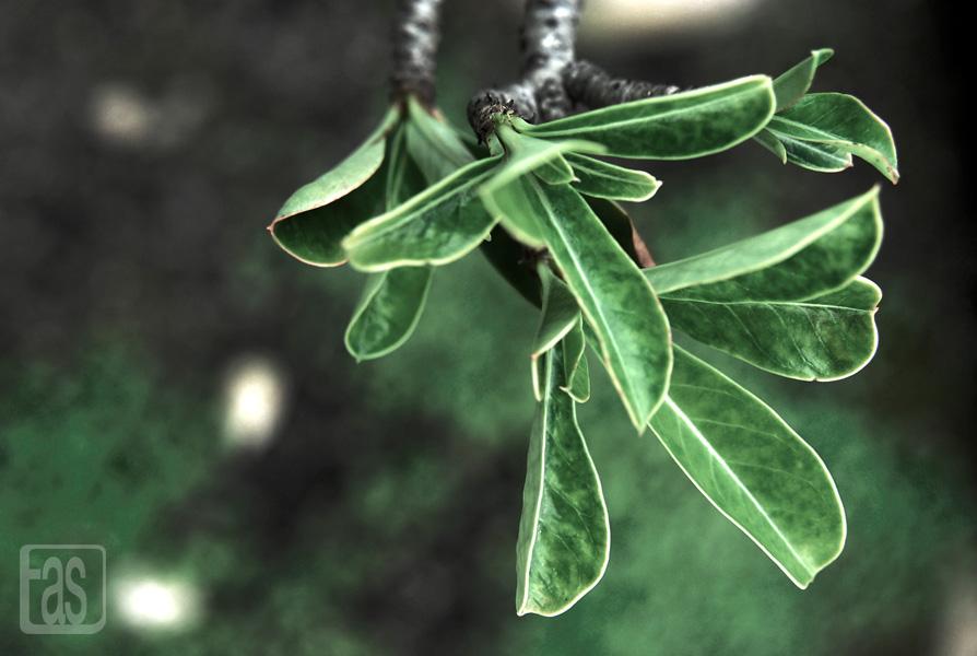 tiny-leaf-wp.jpg